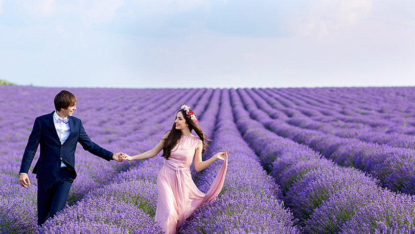 wedding lavender field